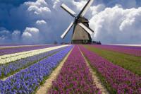 Nuffic Neso Russia запустил стипендиальную программу Orange Tulip Scholarship. Стипендии предоставляется российским студентам на обучение в Голландии.
