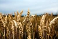 Конференция в Италии для PhD студентов по сельскому хозяйству.