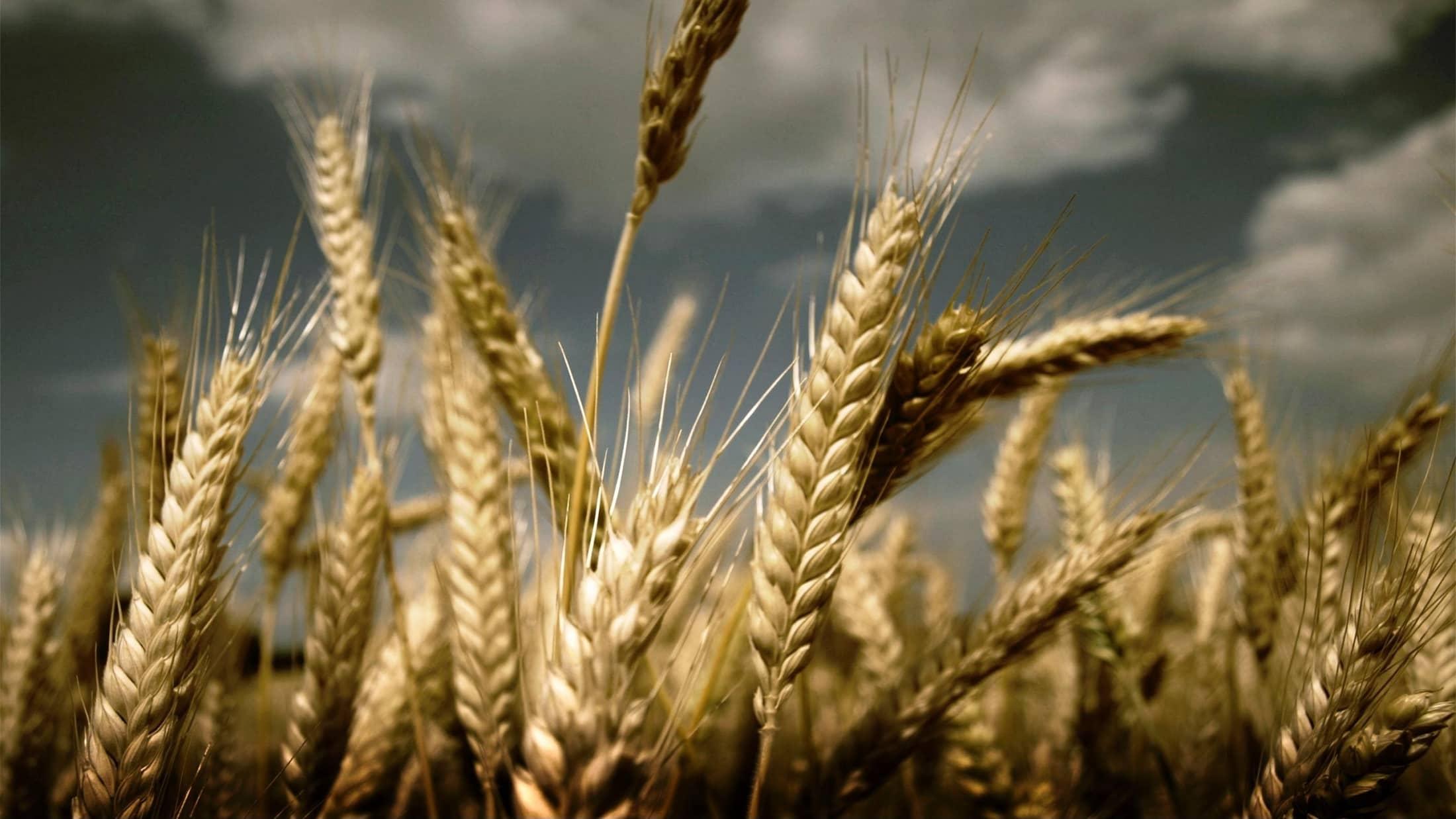 Kmetijske organizacije